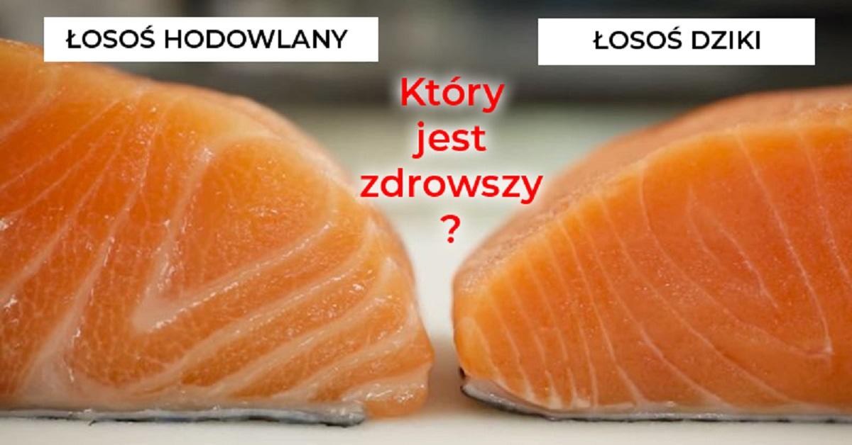 Łosoś hodowlany to strasznie toksyczna ryba. To przerażające, co znajduje się w jego mięsie!