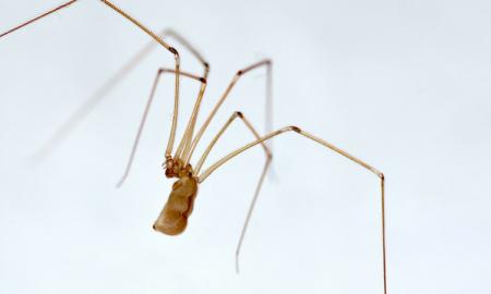 Kobietę z podkarpacia ugryzł pajak. Posadził ją na wózek do końca życia