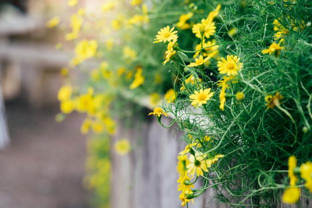 Osoby regularnie uprawiające ogródek mają lepsze zdrowie i są zadowolone z życia