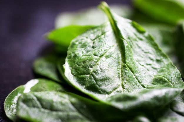 liść zielonego młodego szpinaku