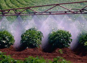8-krotnie przekroczona norma pestycydów dostępna w polskich sklepach. Jabłka nas trują