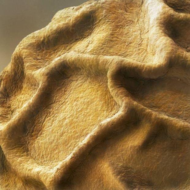 Jedzenie pod mikroskopem