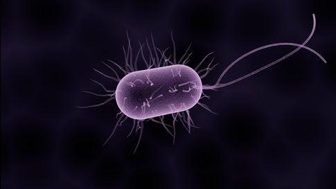 bakteria new delhi
