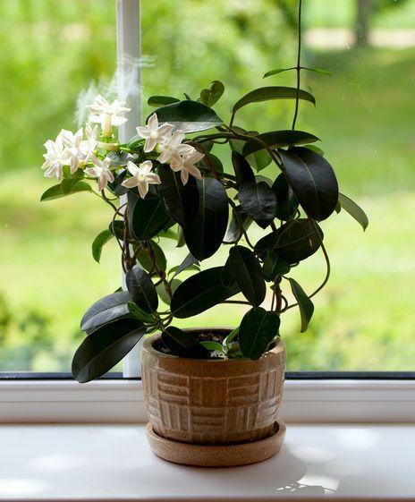 Ta roślina uspokaja niczym silne leki. Wstaw ją do sypialni, a Twój sen będzie lepszy